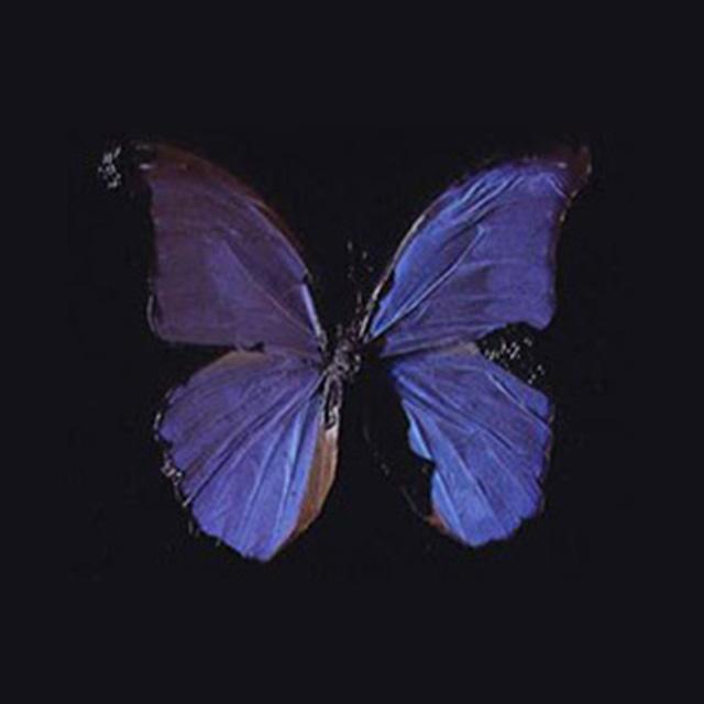 Damian hurst Butterfly