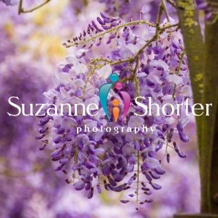 Suzanne Shorter Photography Website